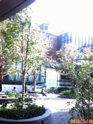丸の内パークビル前のお庭